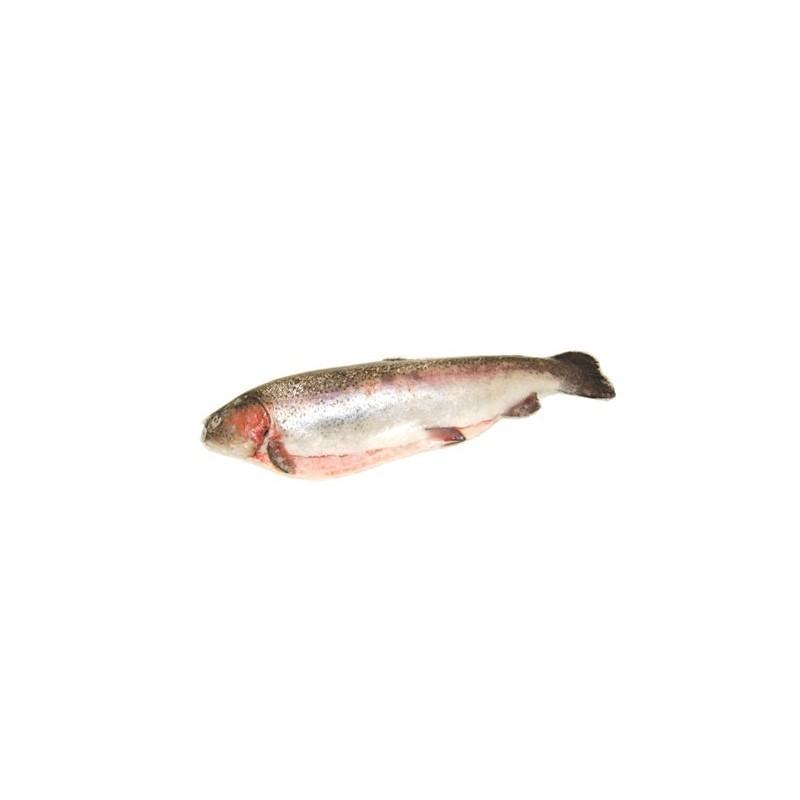 Troć czyszczona, z Francji, ok. 2-3 kg/szt.