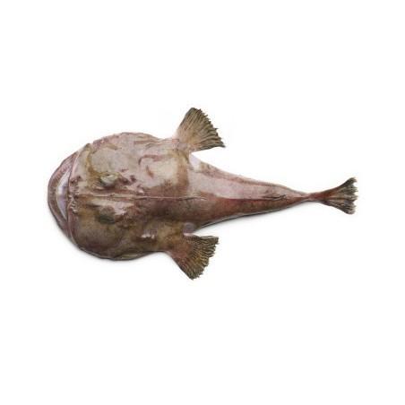 Ogon Żabnicy, z Francji, ok. 2.0 - 3.0 kg/szt