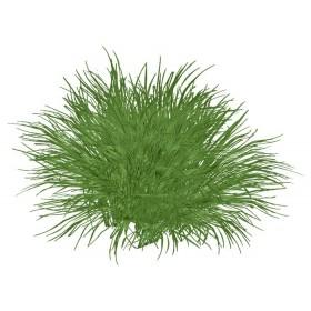 Trawa cytrynowa pocięta i suszona, 100g
