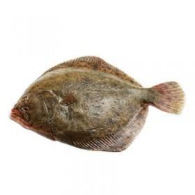 Turbot - dziki, z Morza Północnego, ok. 3-4 kg/szt.