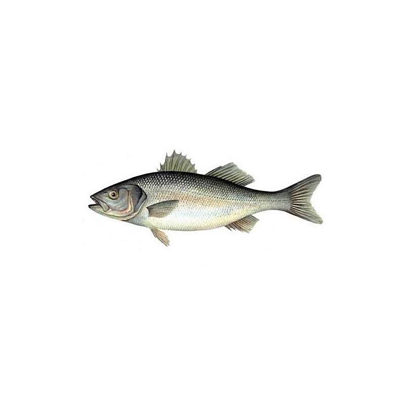Okoń morski ''See bass'' Francja ok. 300-400 g/szt opak 3kg